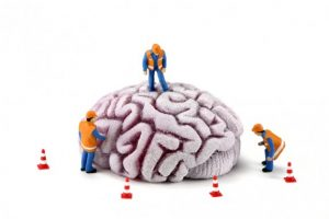 Don't Let Your Amygdala Dictate Your Leadership Style 1
